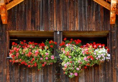 Italy balcony flowers